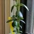 windowsill planter tray image