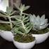 Succulent Tri-Bowl image