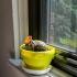 windowsill planter pot image