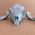 Markhor Skull print image