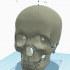 Skull Stand , with helmet image
