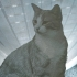 LITHOPHANE CAT image