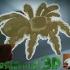 tarantula lithophane image