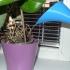 PET bottle watering funnel image