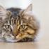 Cat Brain image