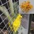 Veggie feeder for chickens - Pinza para vegetales en gallinero image