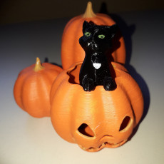 Picture of print of Cat in the pumpkin patch Esta impresión fue cargada por Alfons