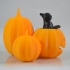 Cat in the pumpkin patch image