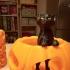 Cat in the pumpkin patch print image