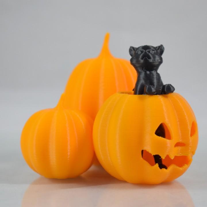 Cat in the pumpkin patch