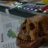 Complete Homo Naledi Reconstructed Skull print image