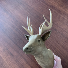 Picture of print of Deer
