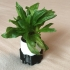 Self watering plant pot image