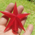 CHRISTMAS STAR TREE TOPPER image