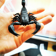 Picture of print of Scorpion 3D Print Model