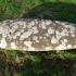 Ogham Stone - Ballintaggart VI (Baile ant Sagairt), Co. Kerry image
