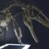 Raptor skull image