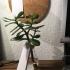 Light Bulb Vase image