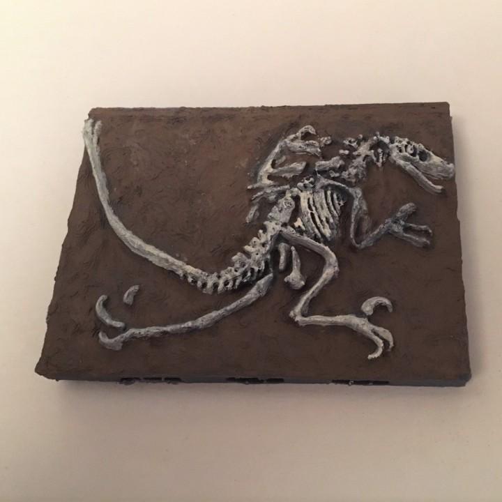 Velociraptor Miniature Fossil with Openlock
