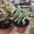 Decagon Flower Pot image