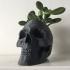 Skull Pot image