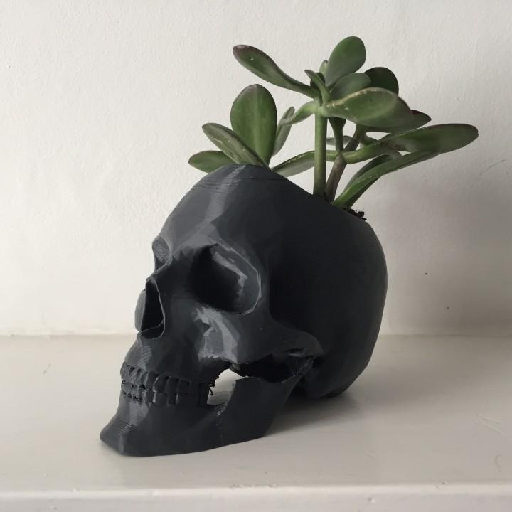 Skull Pot