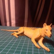 Tasmanian Tiger - Thylacine