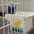 Bird Feeder -Version 2 -MMU image
