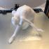 Arched Gymnast print image