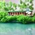 Lake Cabin image