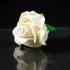 Rose Blossom Tops image