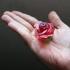 Rose Blossom Tops print image