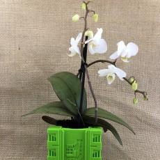 'cong' style box Vase/planter