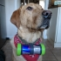 Coopers Can - Upcycled 250ml drinks can into a canine carry pod image