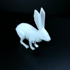 Picture of print of rabbit 3D