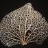 Leaf Veins System print image