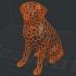 Dual Color Labrador image