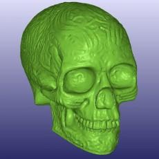 Celtic Skull 3D Scan (Hollow)