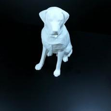 Picture of print of Labrador Sculpture (Dog Statue Color 3D Scan)