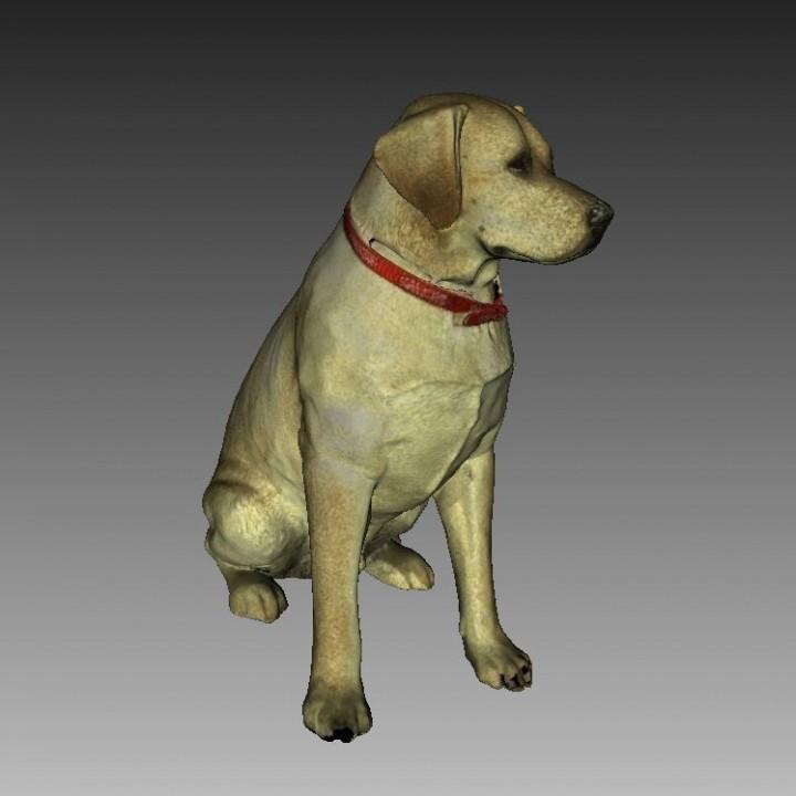 Labrador Sculpture (Dog Statue Color 3D Scan)
