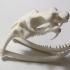 Cobra Skull image