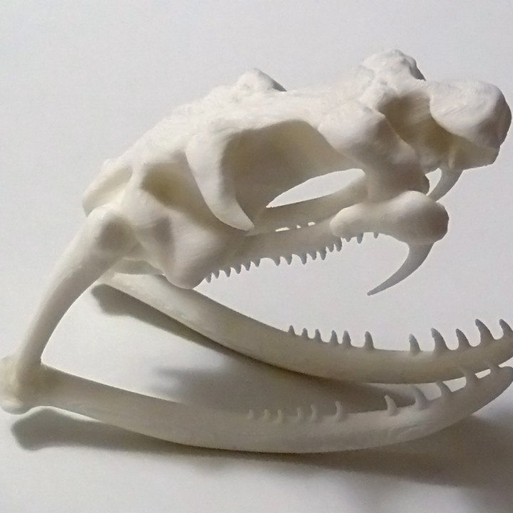 3d Printable Cobra Skull By Oskar Mohar