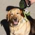 Multi-Color Dog Poop Bag Dispenser image