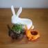 bunny cress-planter image