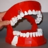 Dental Demonstration Model / Modèle de démonstration dentaire image