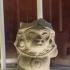 Tumaco Monkey Figurine image