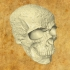 Decorative Skull (Solid And Hollow) image