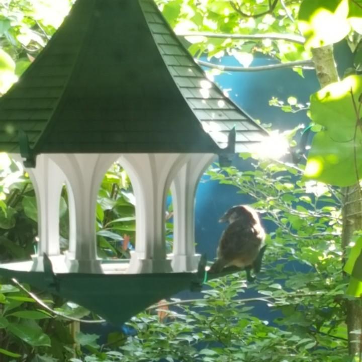 The Light Sky Bird Temple