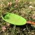 Bee Leaf  #TinkerFun image