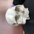 Cro-Magnon - Homo Sapiens Sapiens Female Skull image